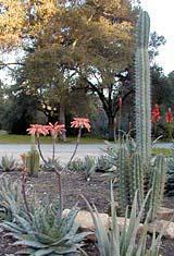 Arizona Garden